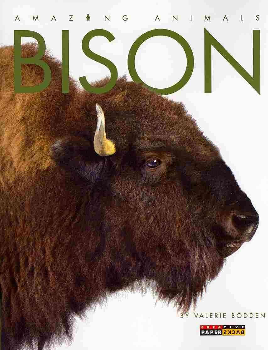 Bison By Bodden, Valerie